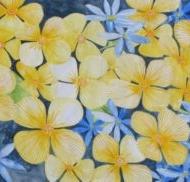 blauw-en-gele-bloemen