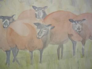 Denise schapen (2)